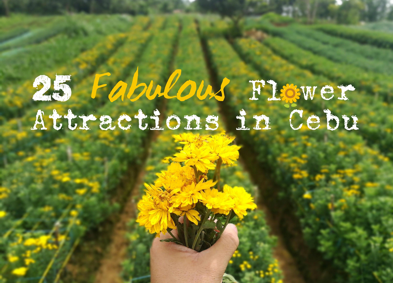 25 Fabulous Flower Attractions In Cebu Vivomigsgee